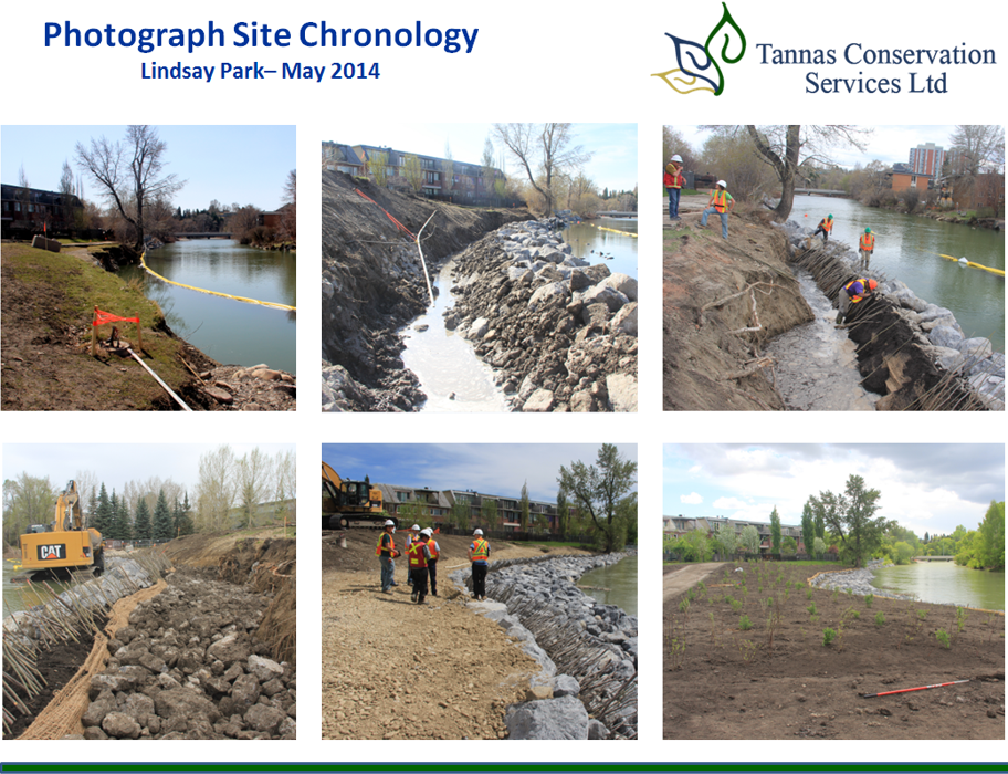 Willow Stake Installation, Bio-engineering of the Elbow River