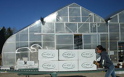 Eileen Tannas of Eastern Slopes Rangeland Seeds Ltd. moves boxes of custom grown seedlings in front of the greenhouse