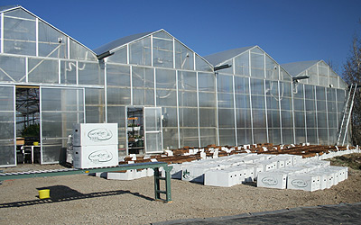 Wholesale Greenhouse